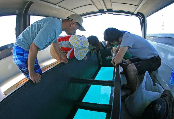 グラスボートなら途中美しいサンゴ礁も堪能できる