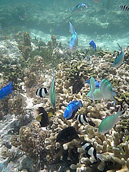 すぐそこには珊瑚礁と熱帯魚たち